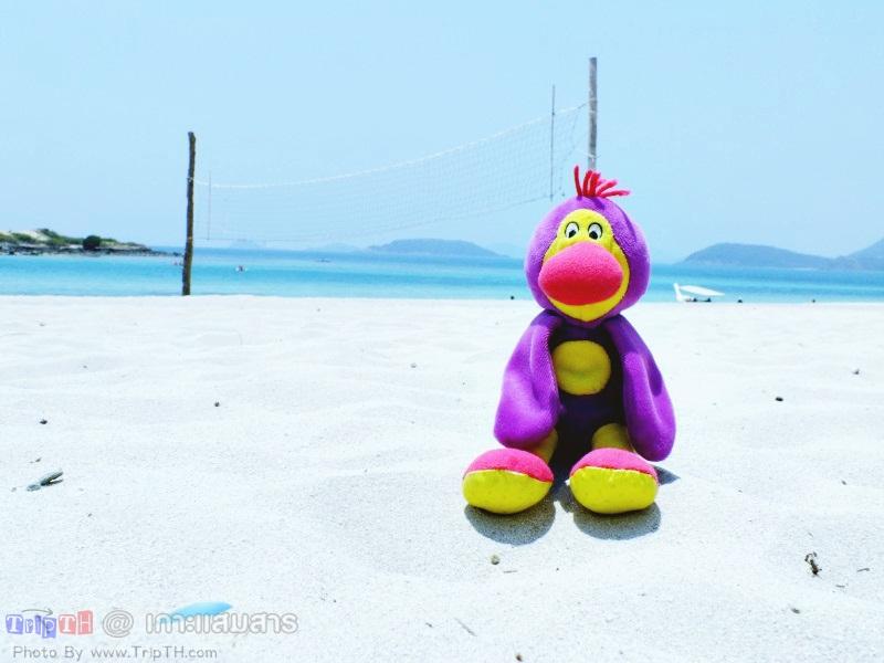 พาลูกน้อง มาเที่ยวทะเล (1)