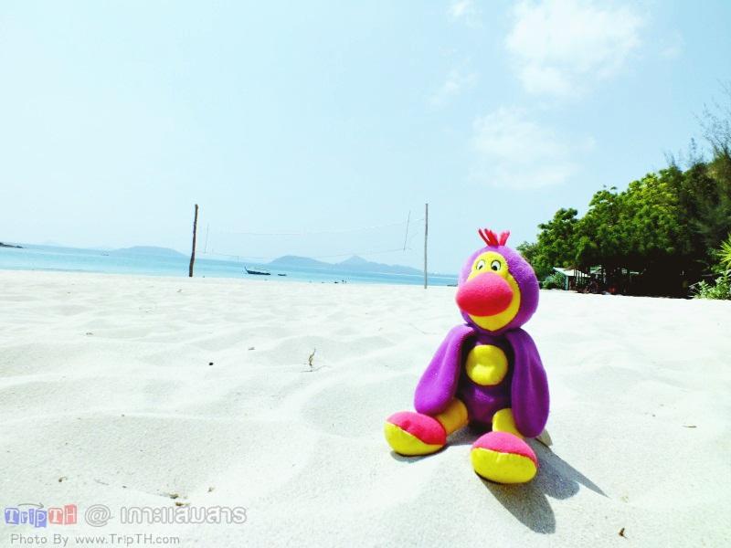 พาลูกน้อง มาเที่ยวทะเล (3)