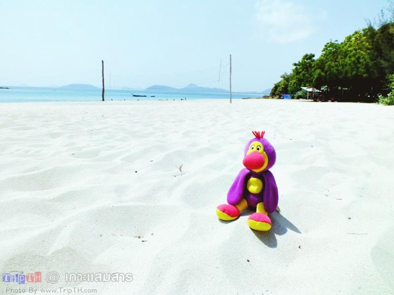 พาลูกน้อง มาเที่ยวทะเล (4)