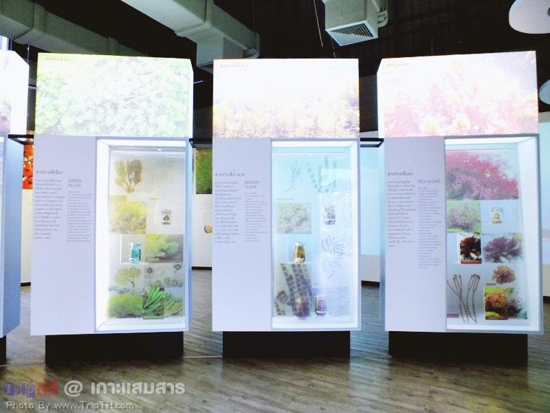 พิพิธภัณฑ์ธรรมชาติวิทยาเกาะและทะเลไทย (3)