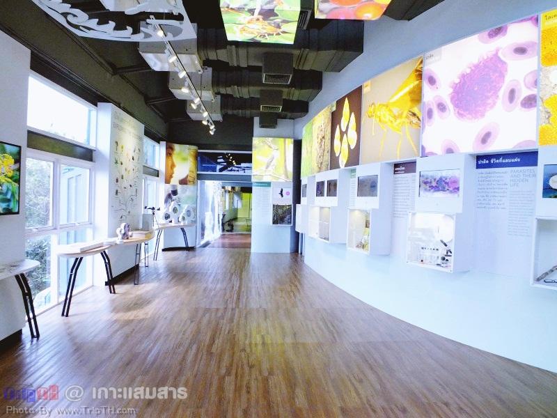 พิพิธภัณฑ์ธรรมชาติวิทยาเกาะและทะเลไทย (5)